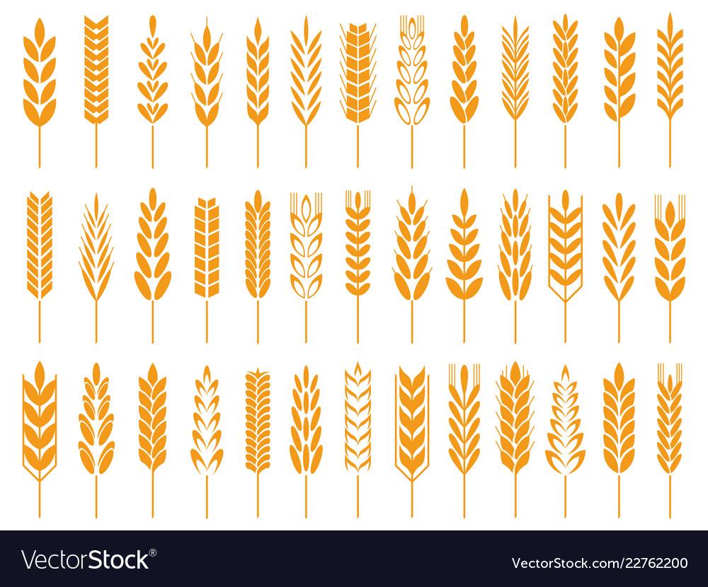 Wheat grain icons wheats bread logo farm grains