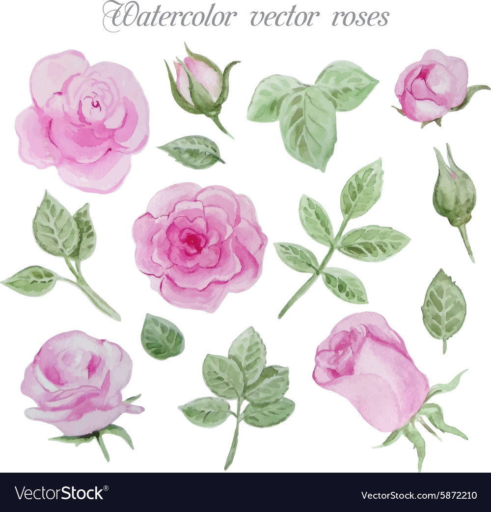 Watercolor roses elements set leaves and flowers