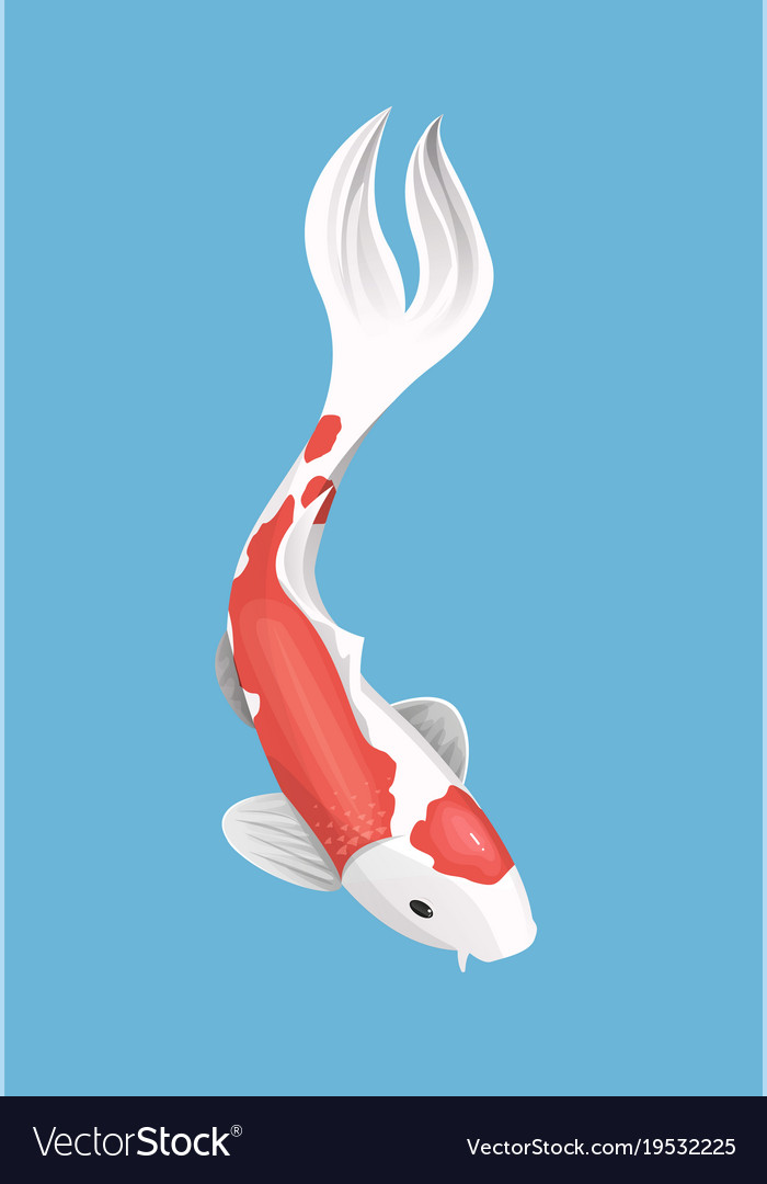 chinese japanese koi fish red carp royalty free vector image