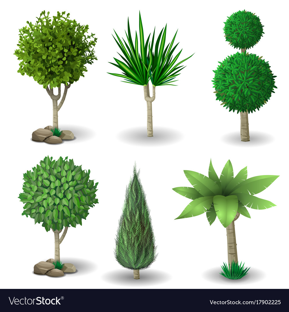 Set Of Decorative Plants Royalty Free Vector Image