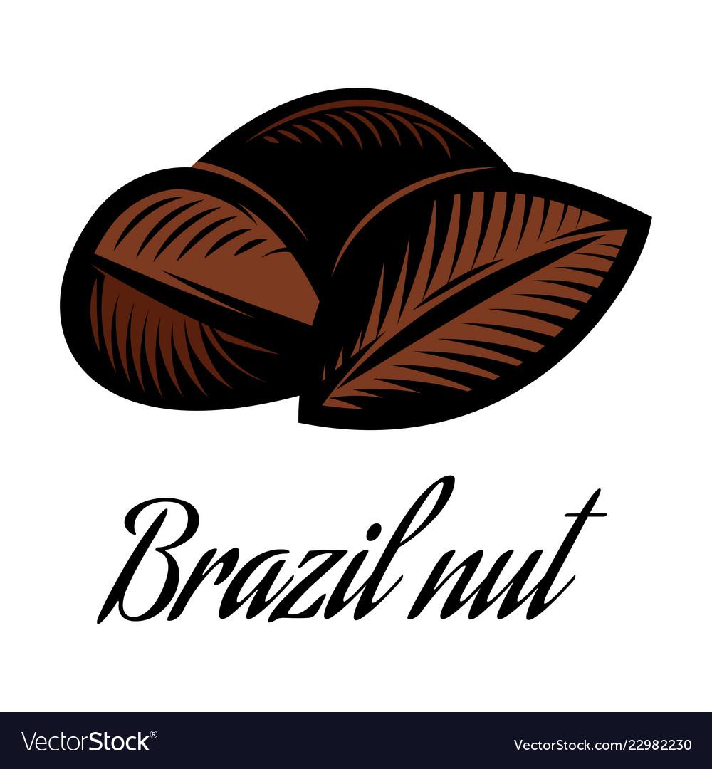 Color of a brazil nut