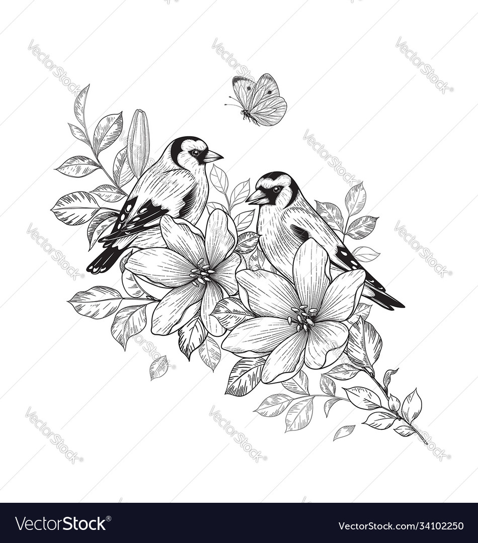 Hand drawn goldfinches sitting on flower