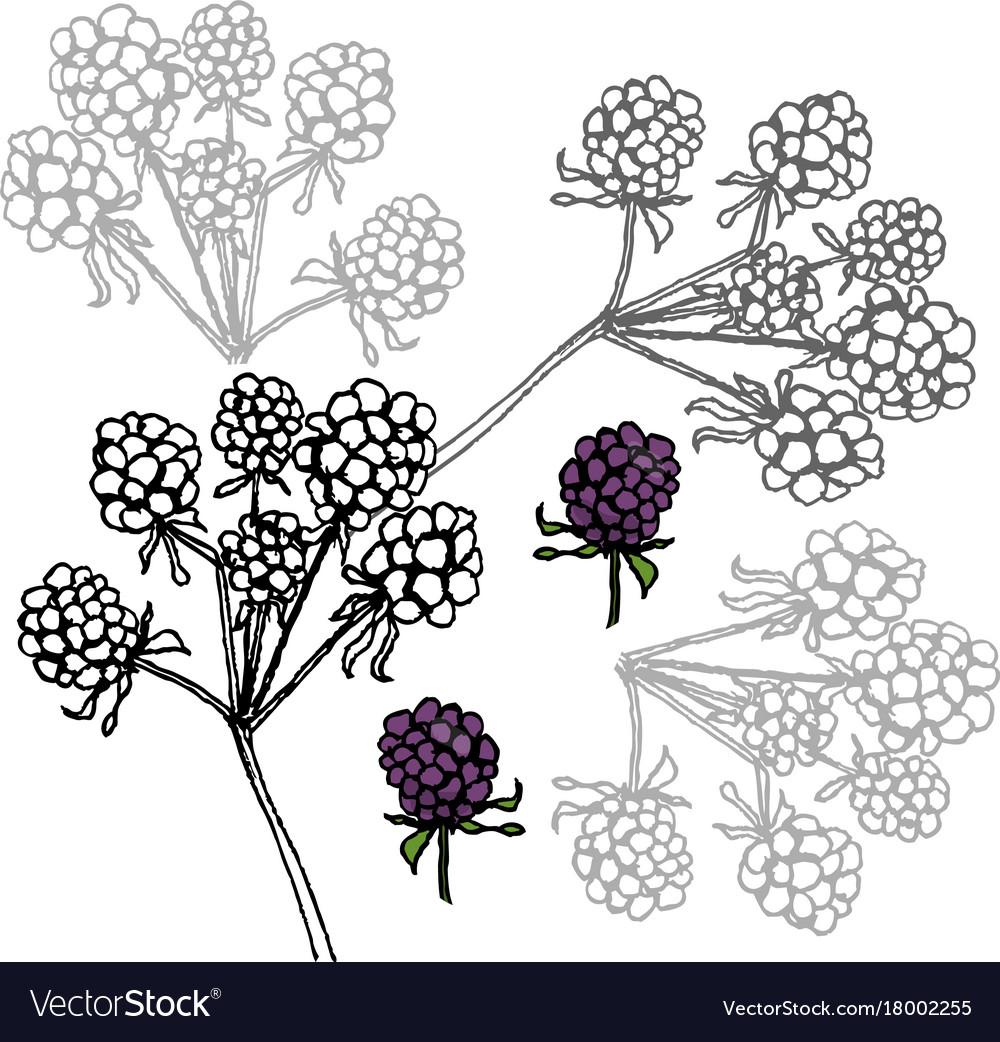 Brambleberry liner on white