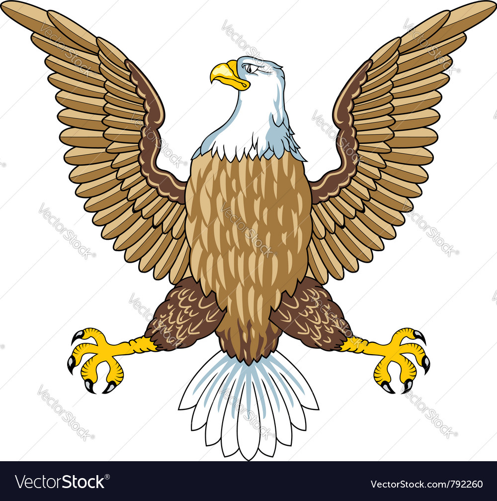 american bald eagle royalty free vector image vectorstock rh vectorstock com bald eagle vector free bald eagle vector art free