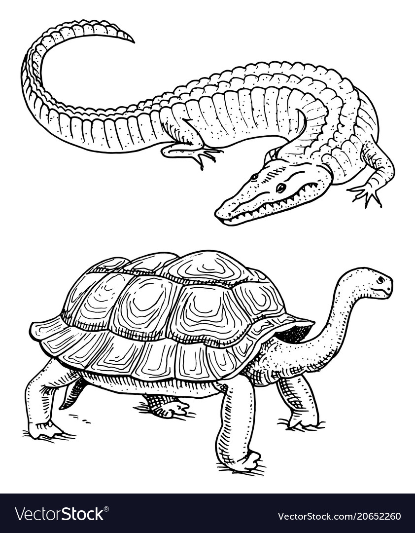 Crocodile and turtle reptiles and amphibians pet