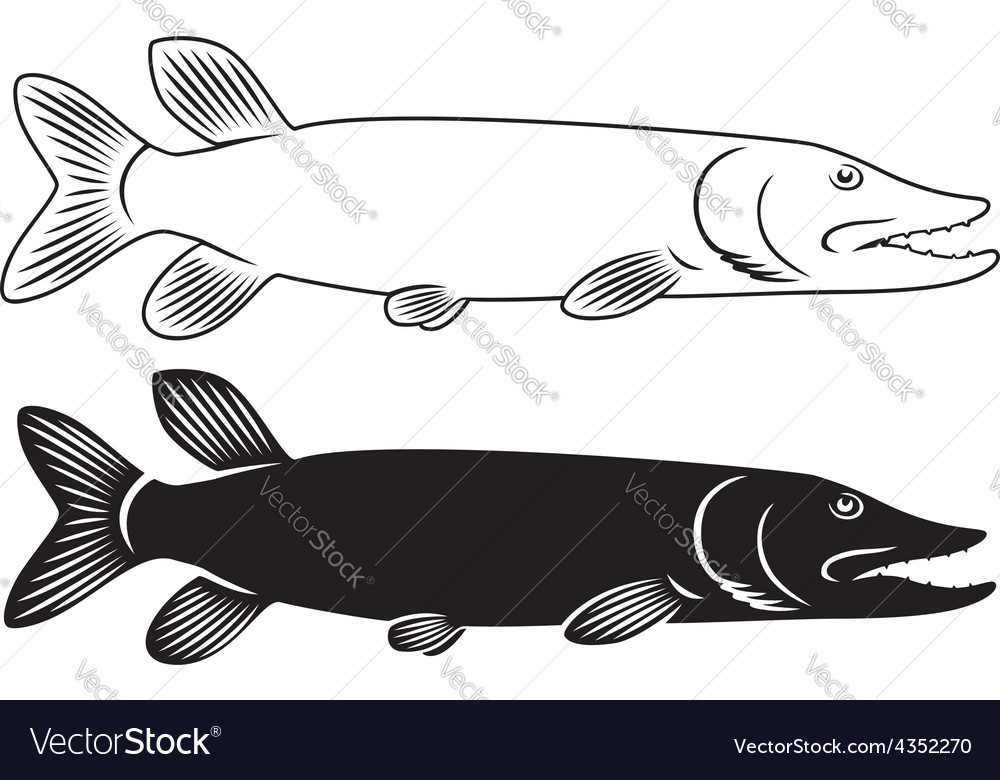 Fish pike vector image
