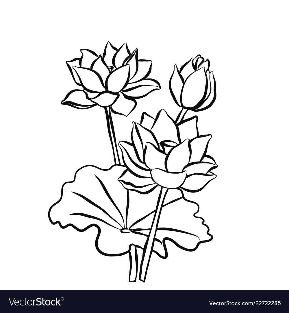 Lotus Flower Images Black And White Flowers Healthy