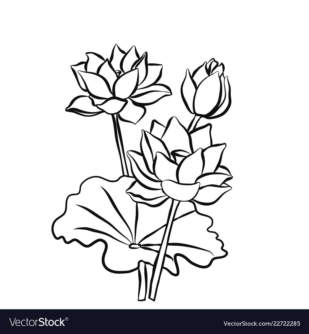 Beautiful Lotus Flowers Black White Isolated Vector Image