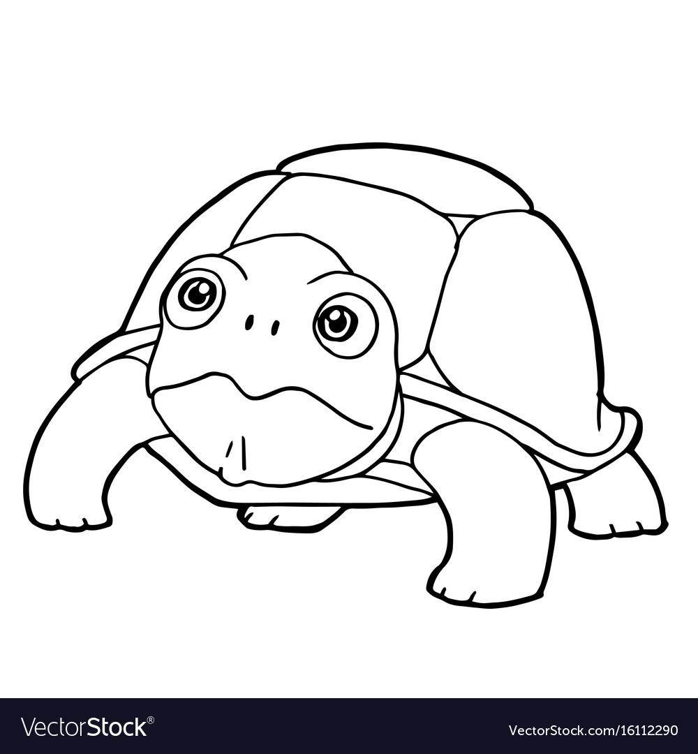 Cartoon cute turtle coloring page vector image