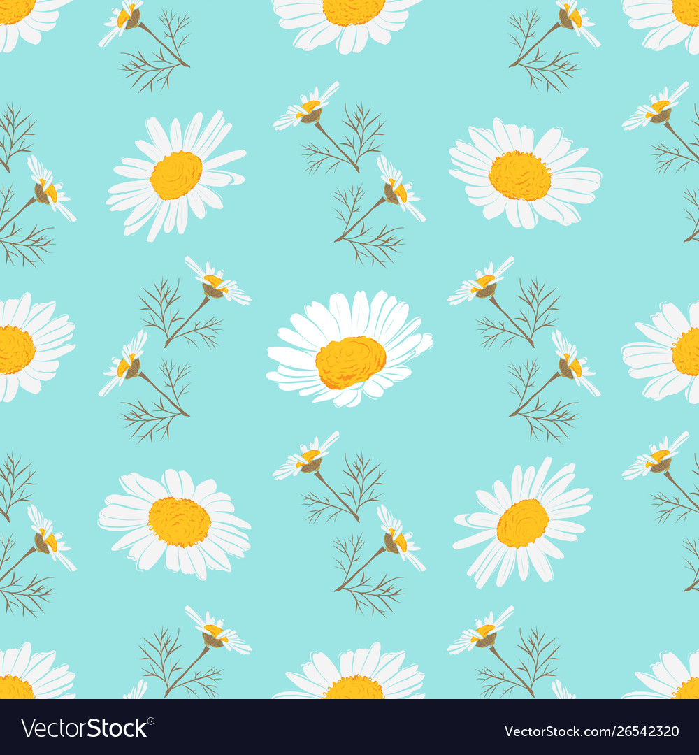 Daisy seamless pattern chamomile background vector