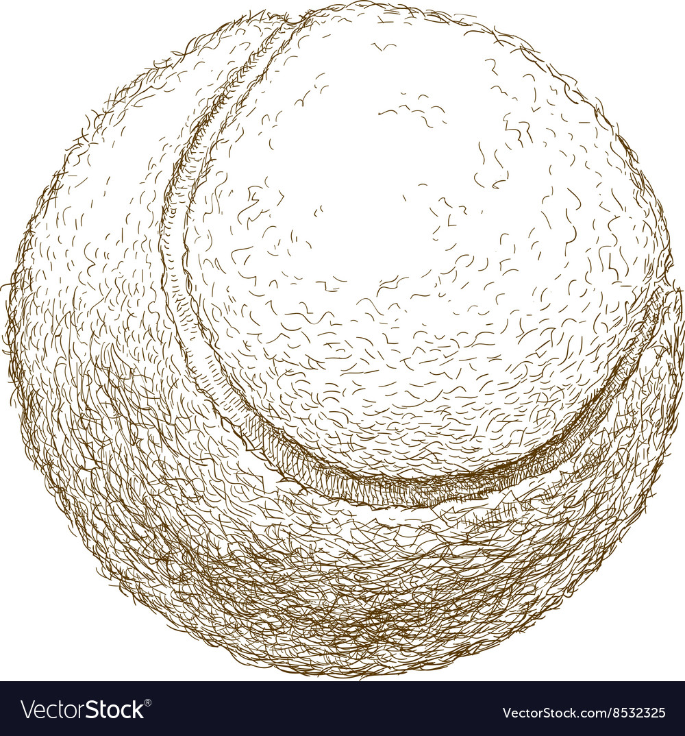 Engraving tennis ball vector image
