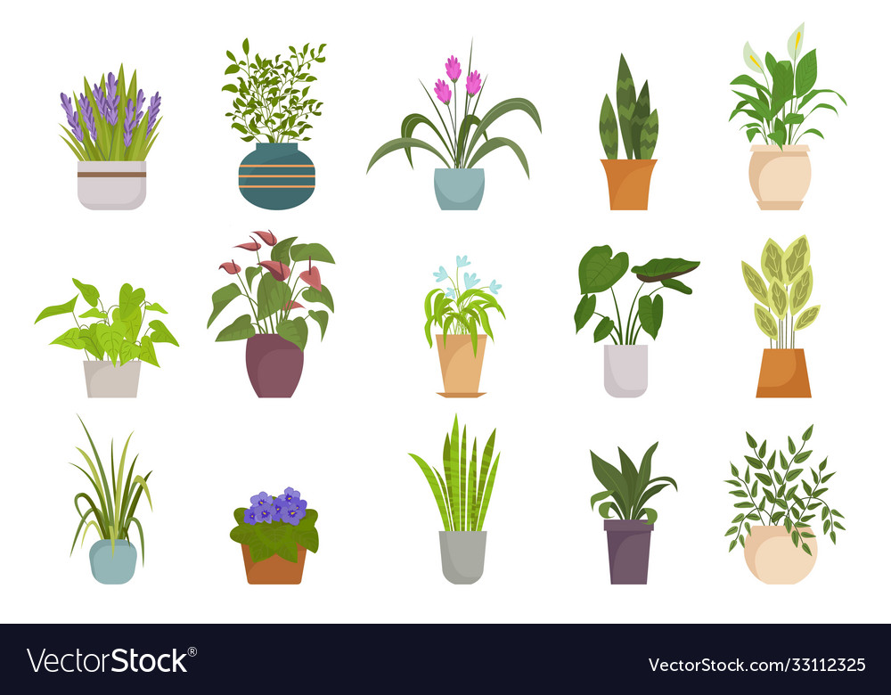 Houseplants in pots set botanical collection