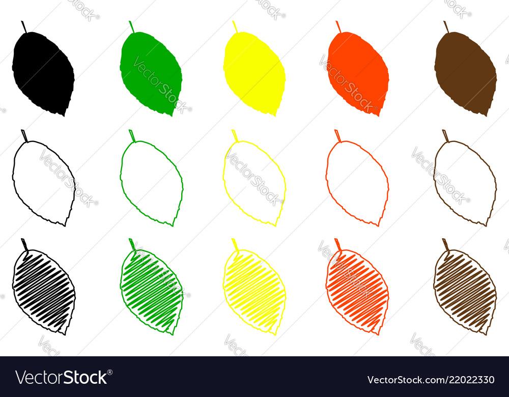 Beech leaves color set