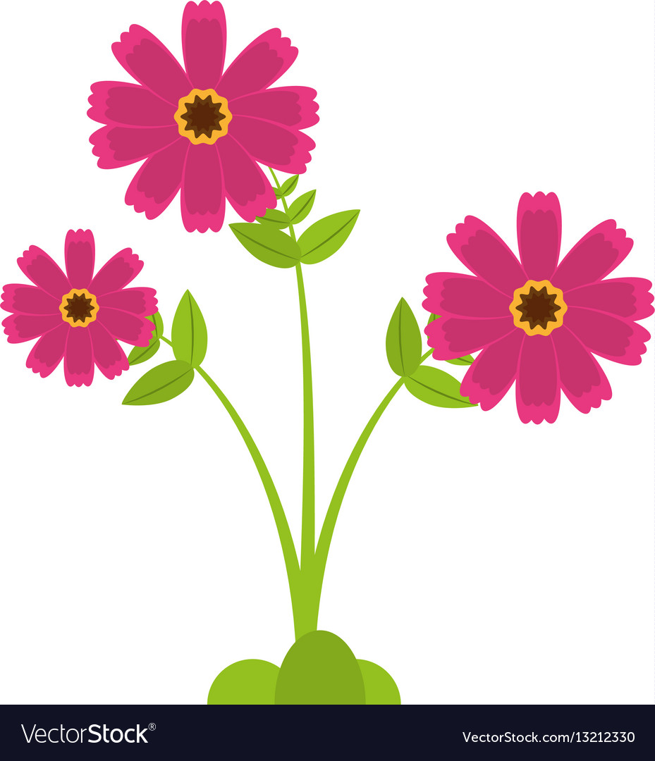 Pink Cosmos Flower Spring Icon Royalty Free Vector Image