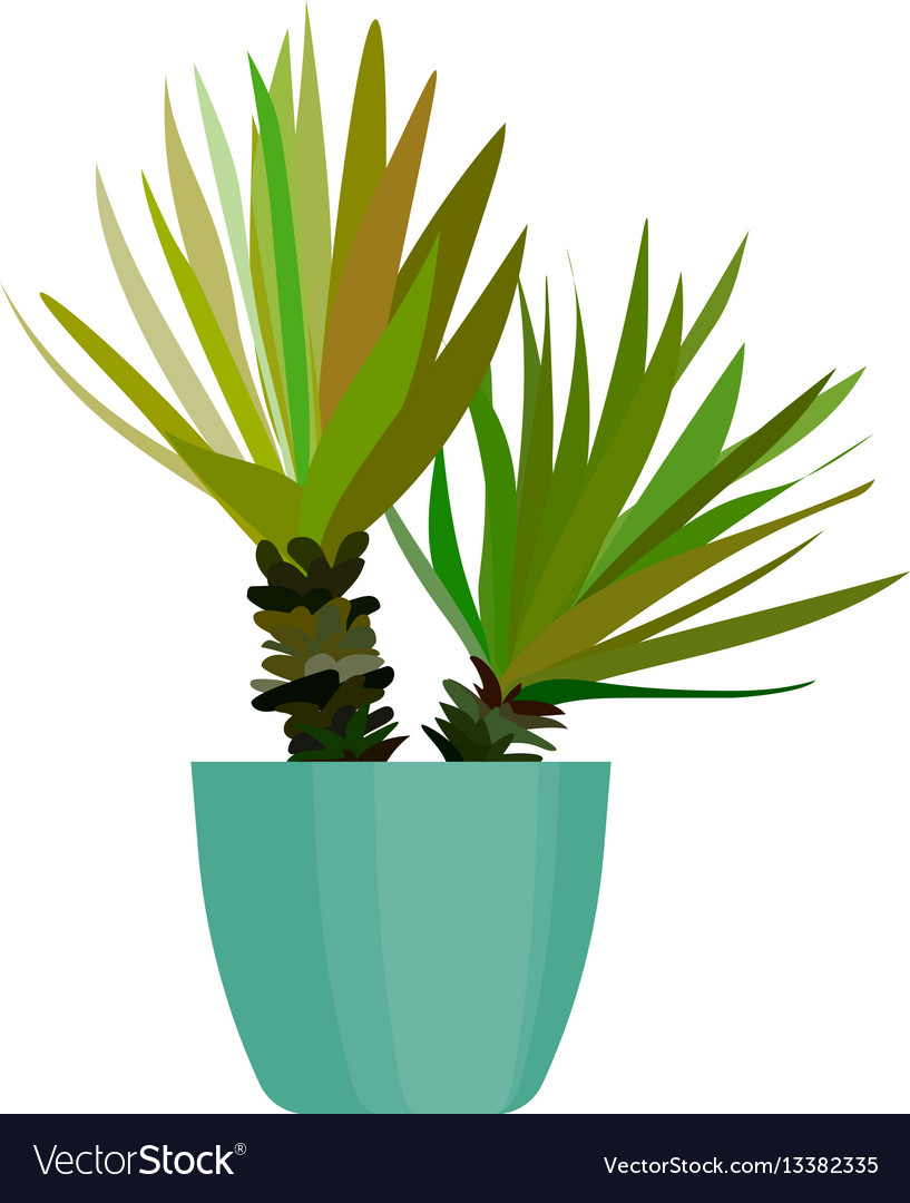 Green house plant in pot leaf cactus flat
