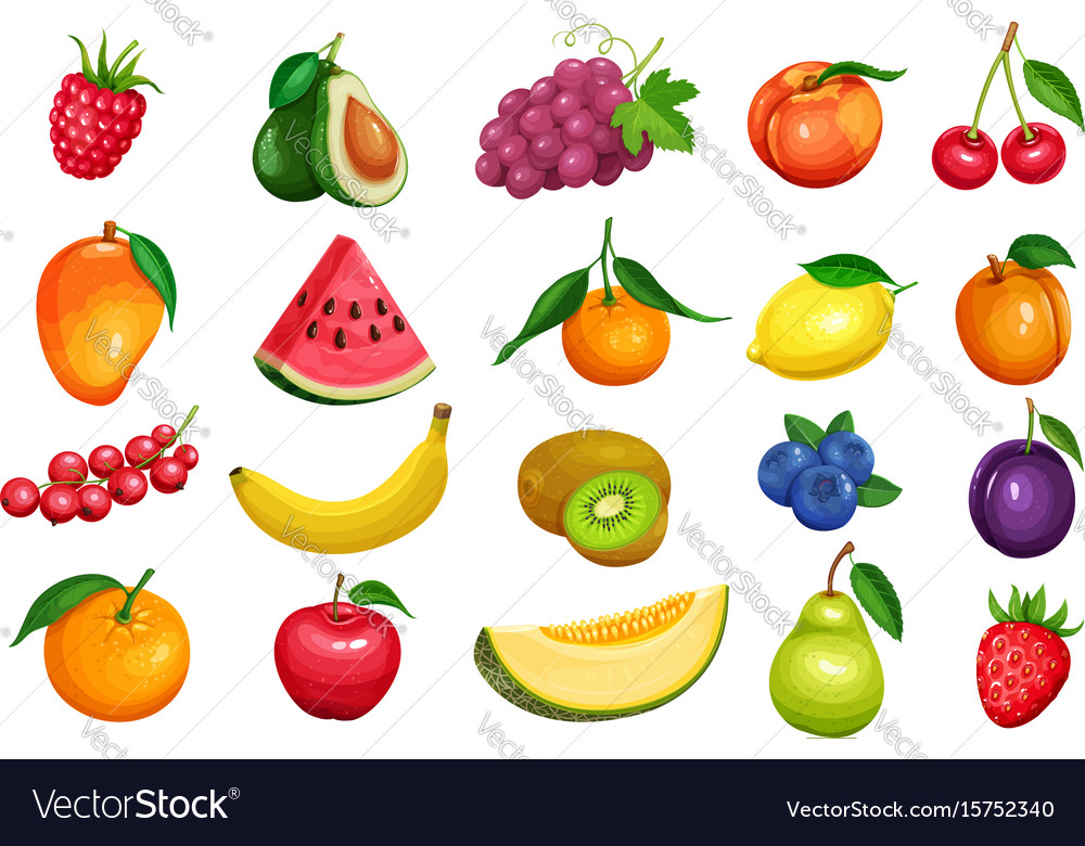 Berries and fruits in cartoon style vector image