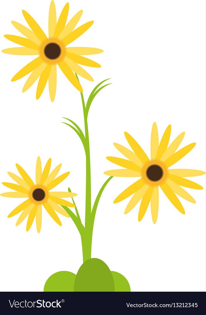 Marigold flower decorative plant