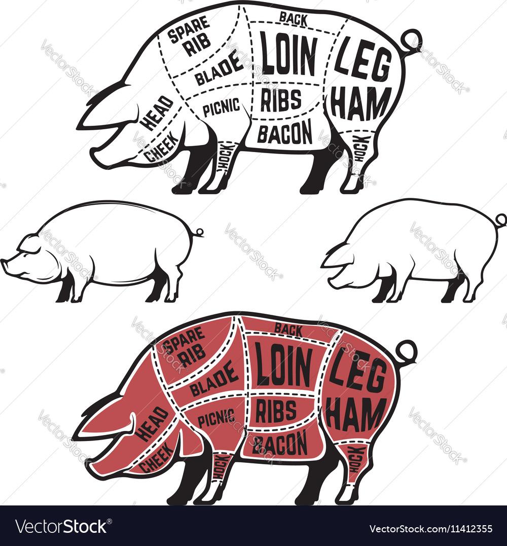 Butcher diagram scheme and guide - Pork cuts
