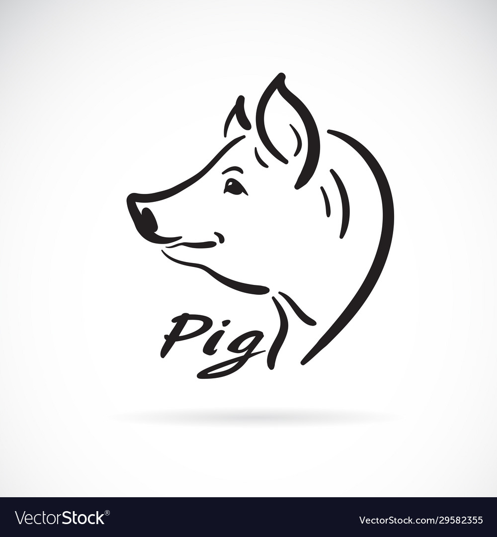 Freehand pig head painting on white background