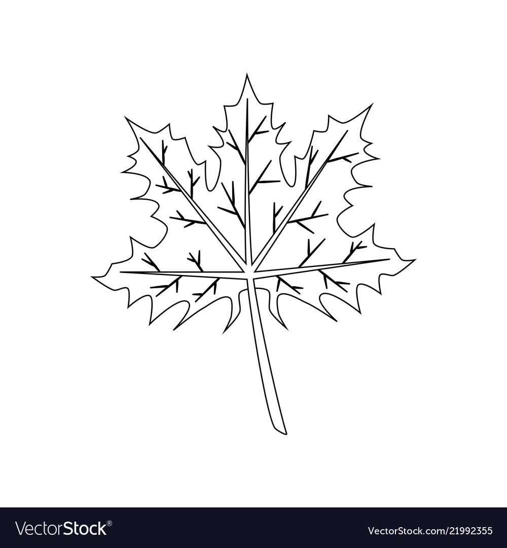 Maple Leaf Coloring Page Royalty Free Vector Image
