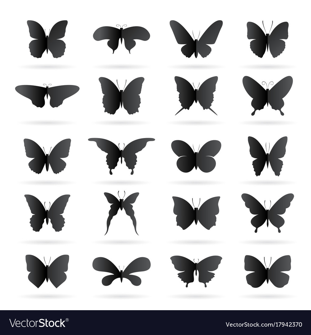 Group of black butterfly on white background