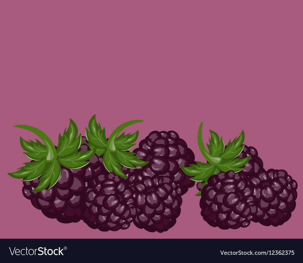 Blackberries delicious background