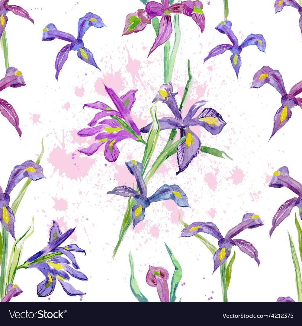 Seamless texture watercolor flowers iris vector