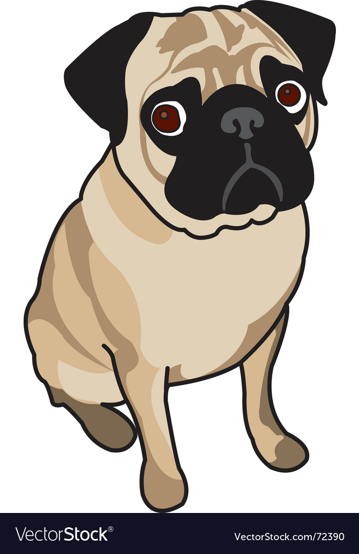 Cute pug vector image