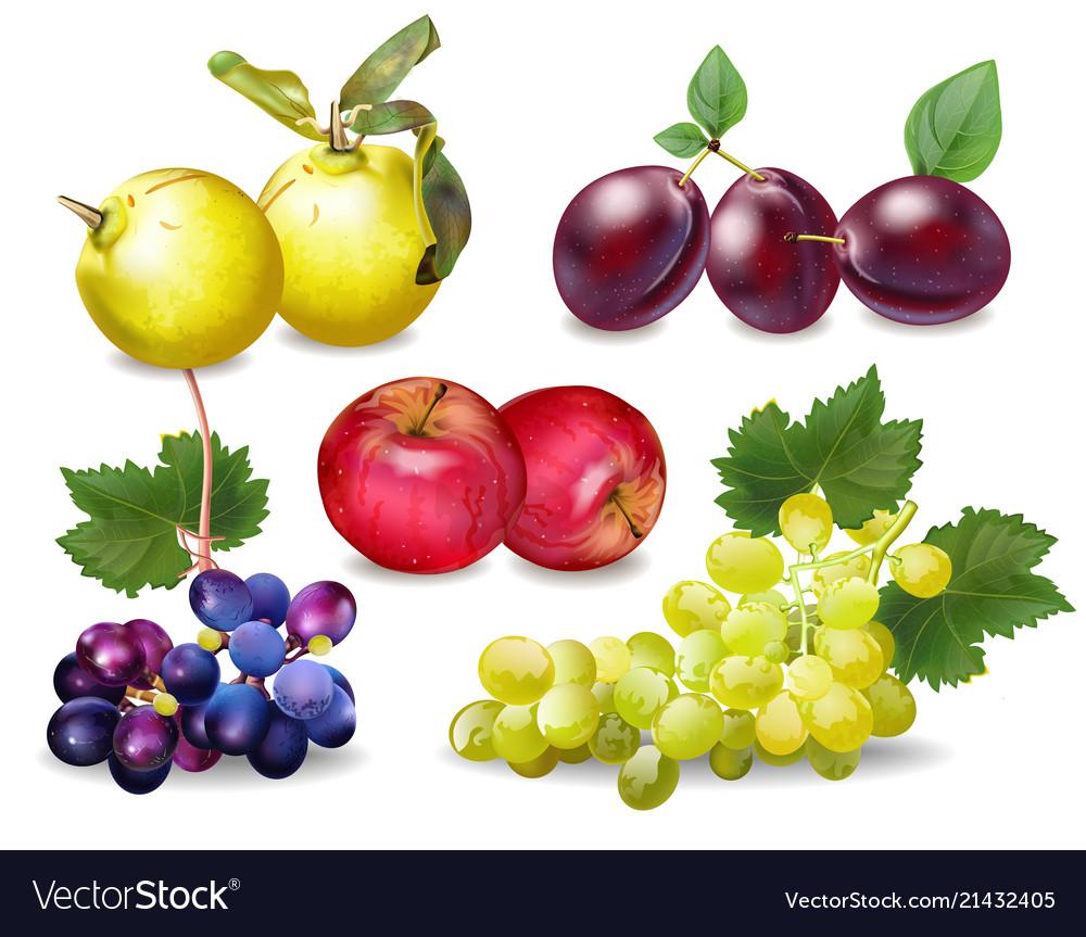 Autumn fruits set realistic plums apple