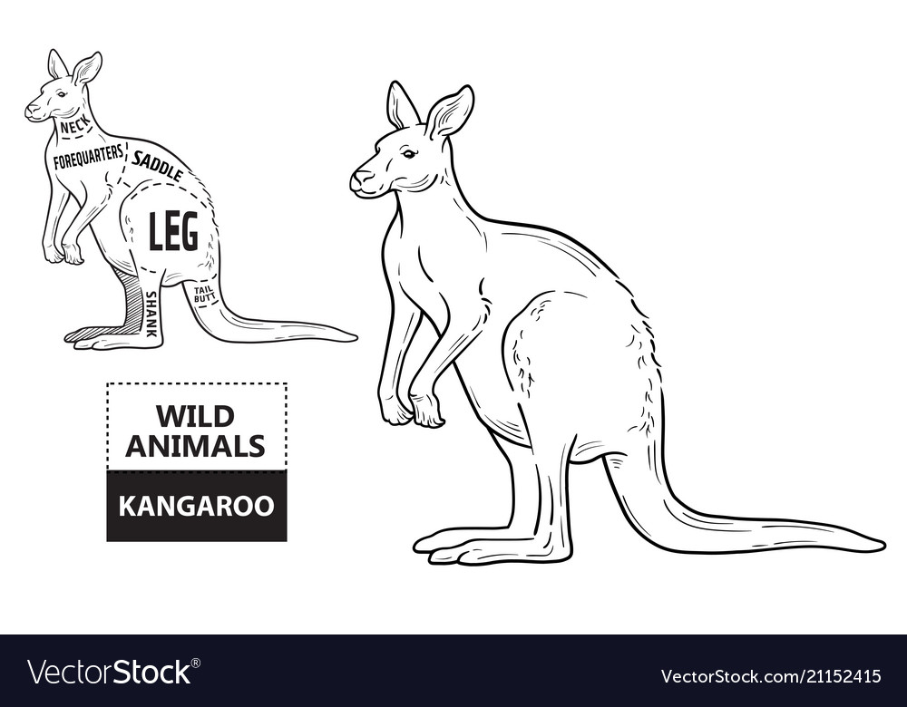 Cut of kangaroo set poster butcher diagram vector image ccuart Choice Image