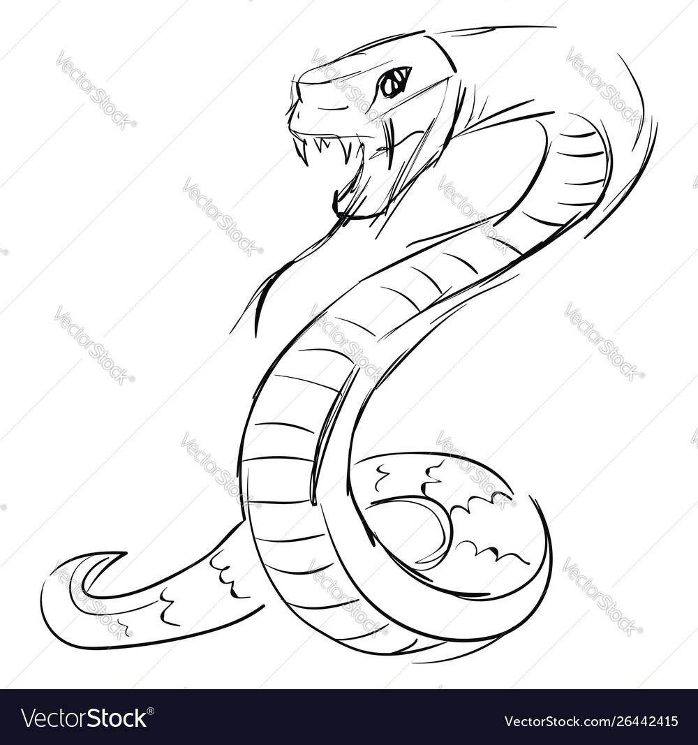 Snake Drawing On White Background