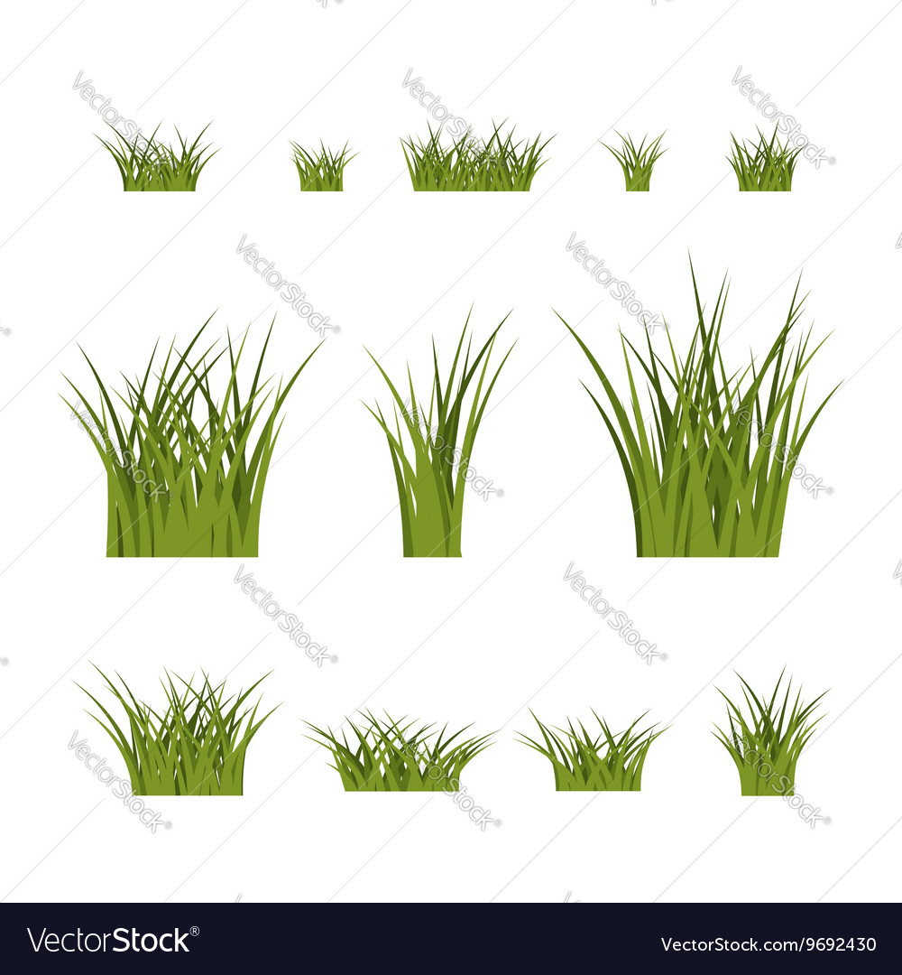 Green Grass Bushes Plant Isolated Royalty Free Vector Image
