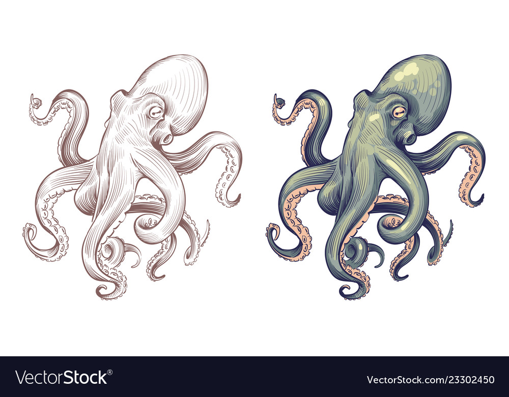 Octopus seafood sea animal squid with tentacles