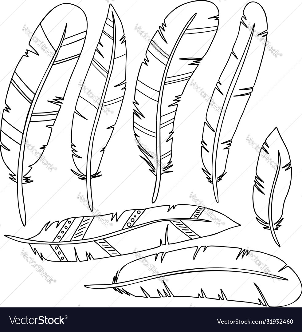 Set feathers in line style isolated on