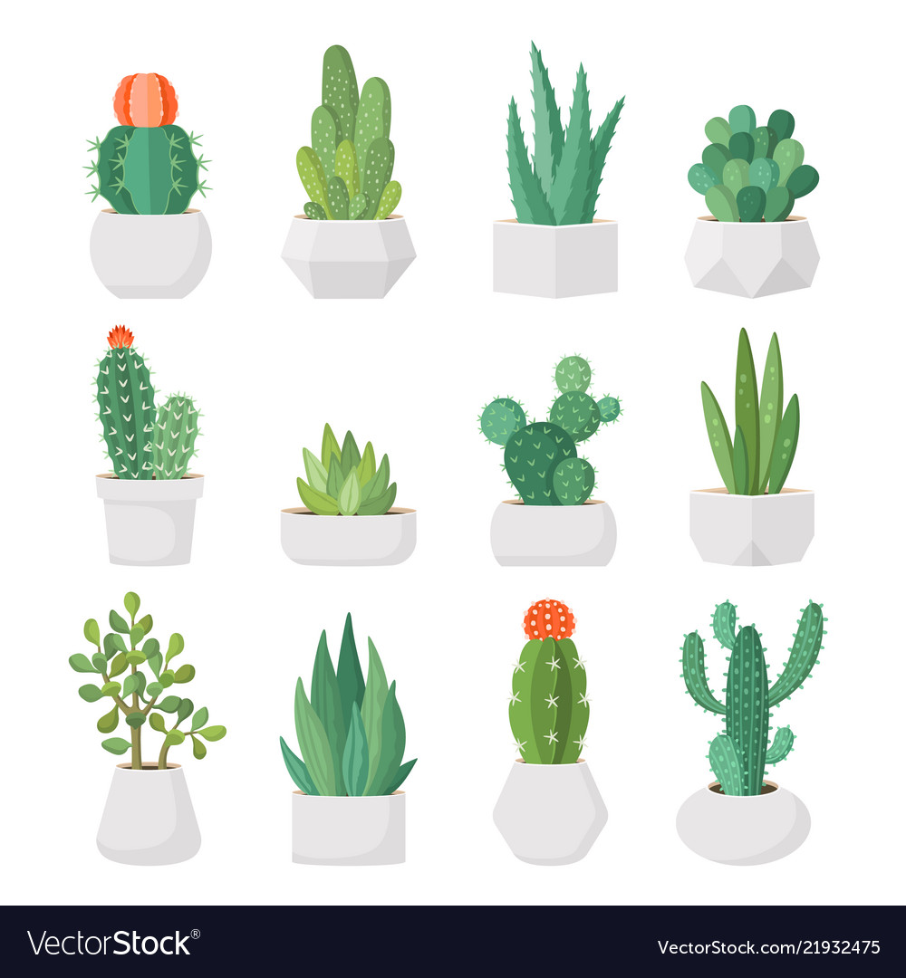 Cartoon Cactus And Succulents In Pots Set Vector Image