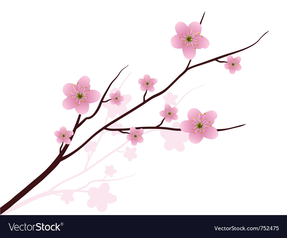 cherry blossoms royalty free vector image vectorstock rh vectorstock com cherry blossom vector black and white cherry blossom vector ai
