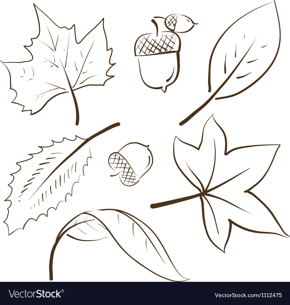 Doodle Autumn Fall Leaves Acorn Royalty Free Vector Image