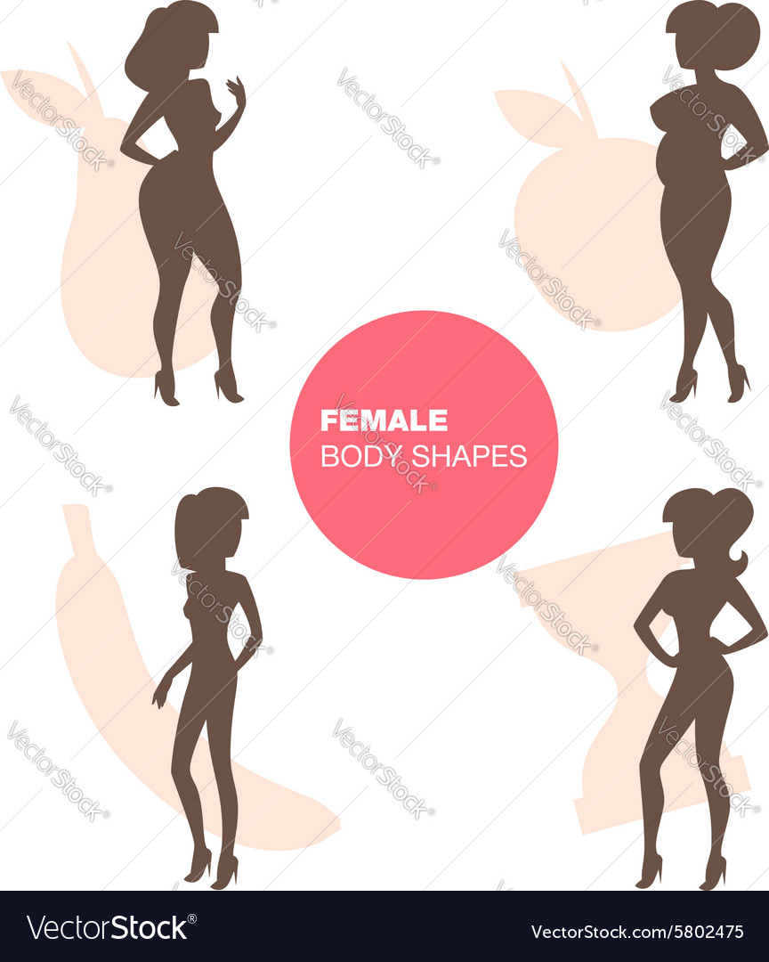 Female body shapes vector image