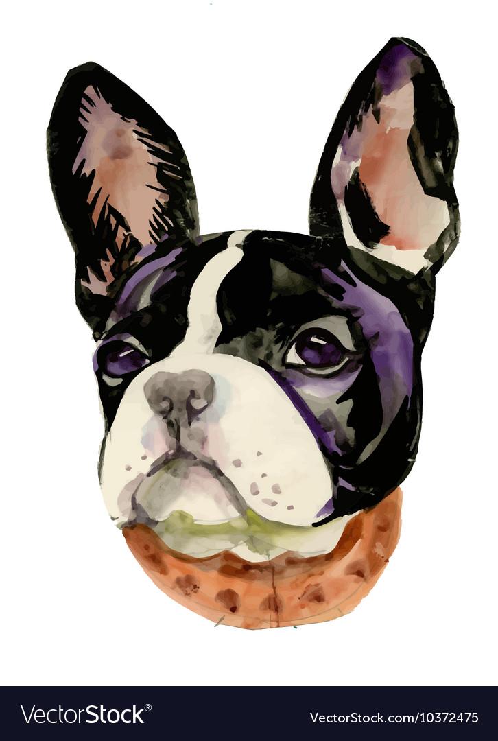 French Bulldog muzzle watercolor