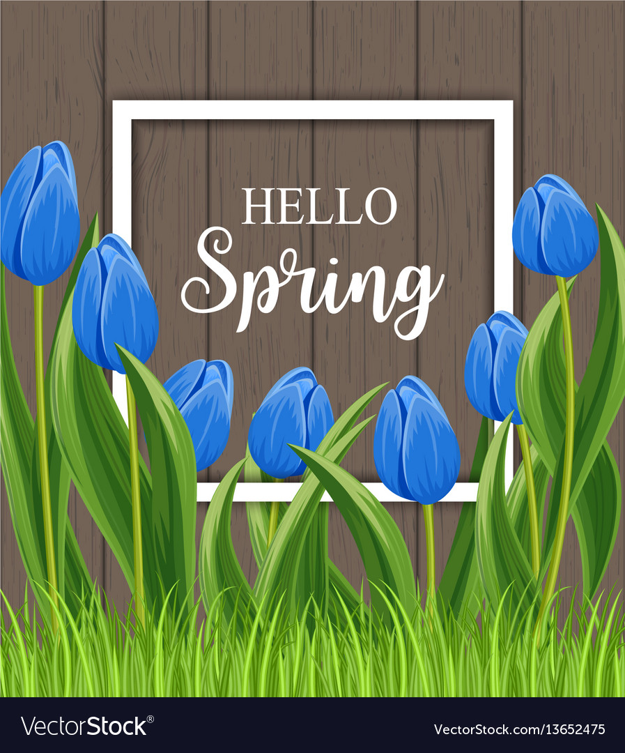 Hello spring banner with blooming tulip