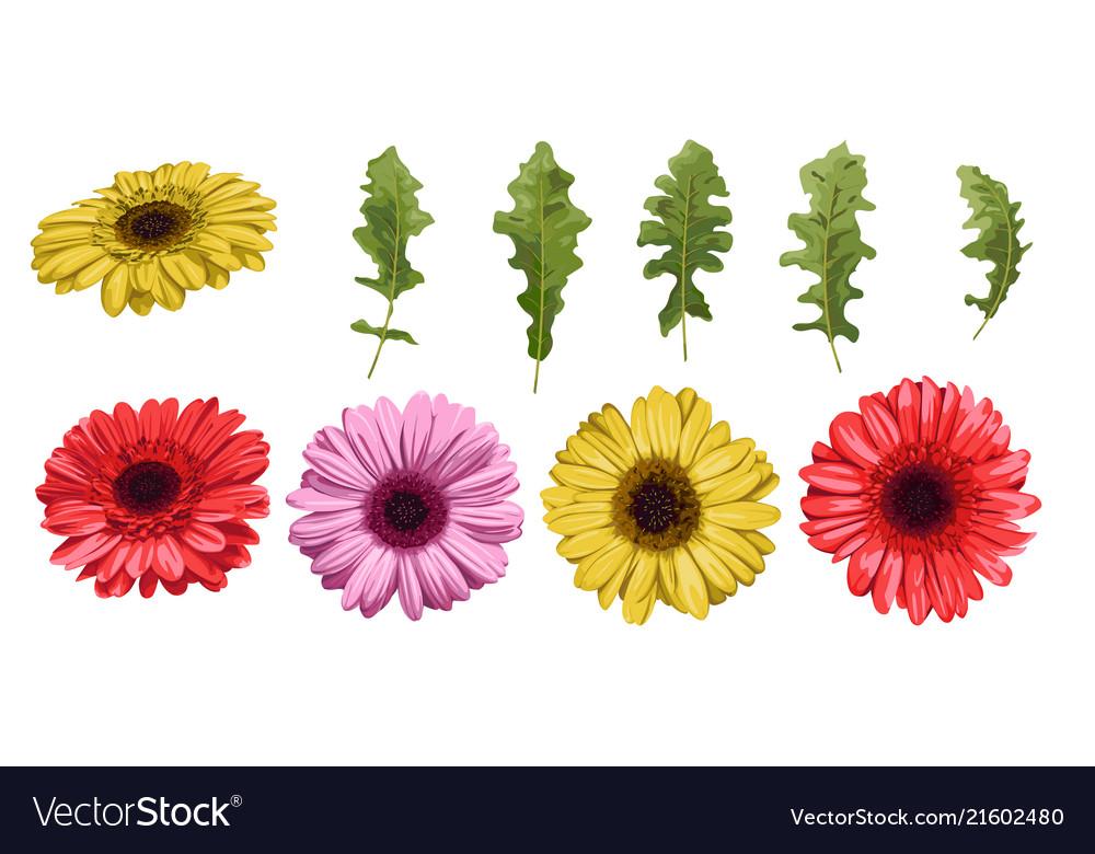 Watercolor flower gerbera and leaves elements