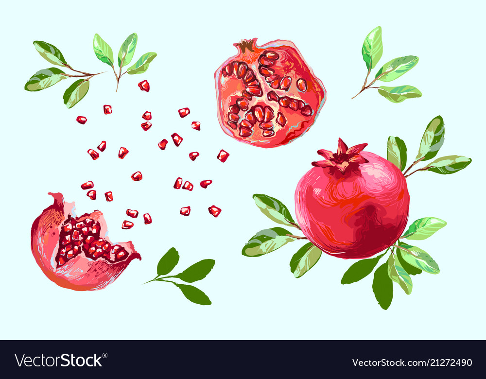 Pomegranate set with leaves half pomegranate and