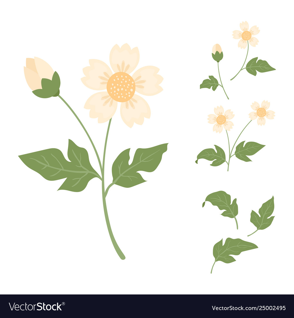 Cute Yellow Flowers Isolated On White Background Vector Image