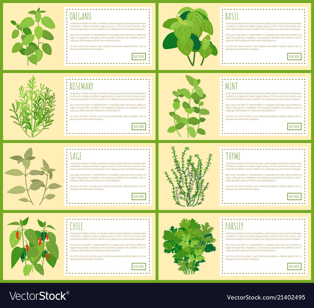Natural Herbal Spices With Description Banners Set