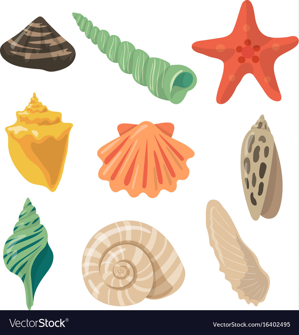 Summer tropical objects marine shells in cartoon