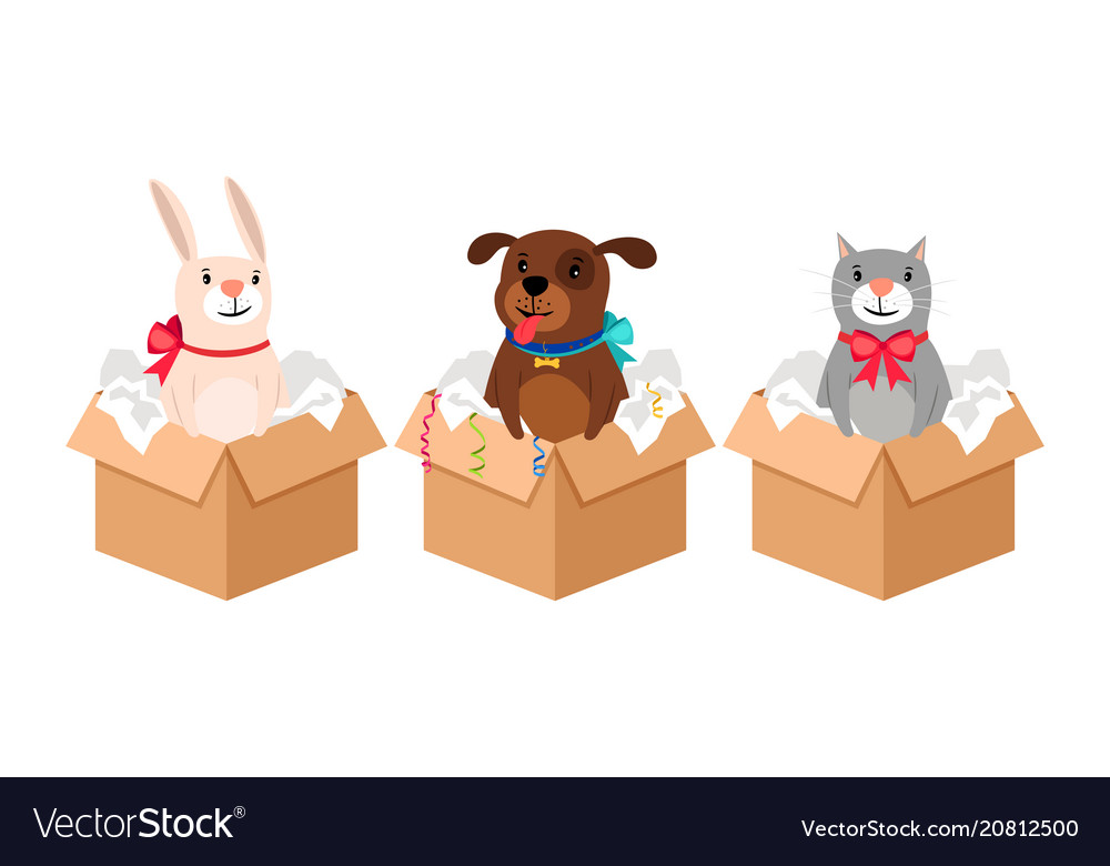 Pets in boxes