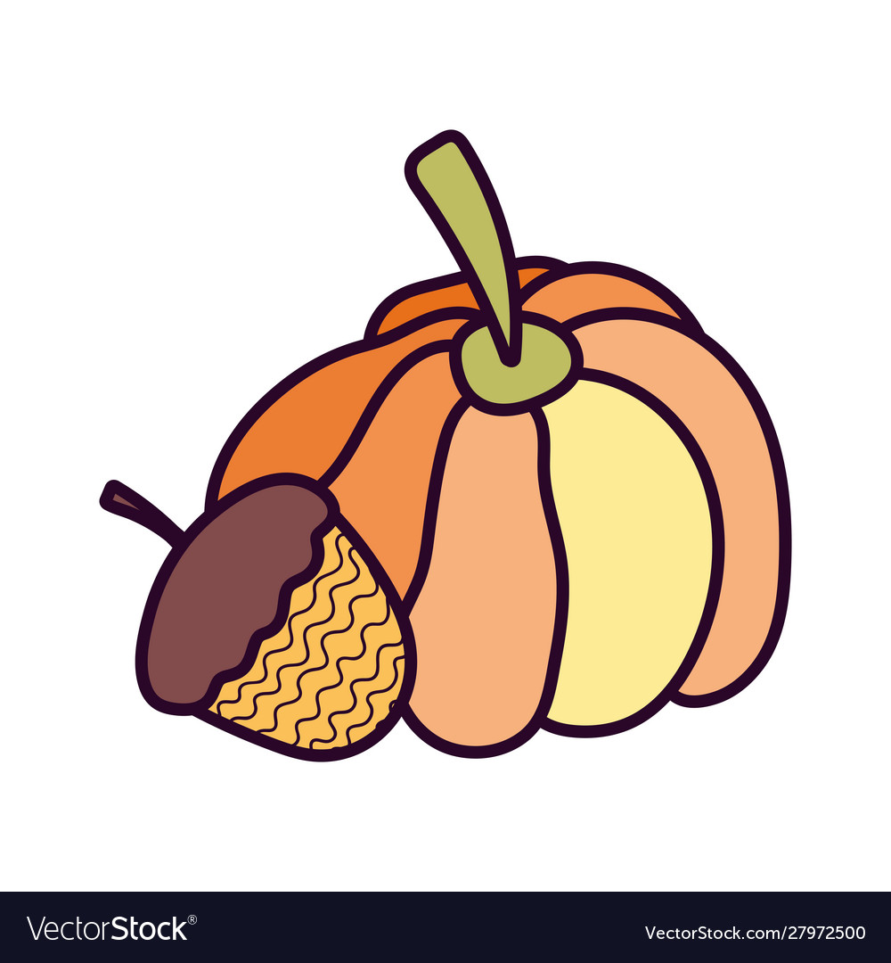 Pumpkin and acorn on white background