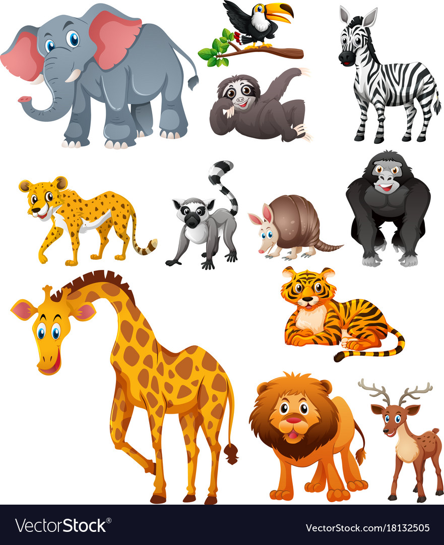 Different types wild animals Royalty Free Vector Image