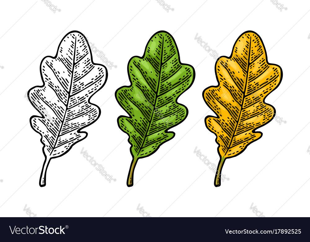 Oak leaf spring green and autumn orange