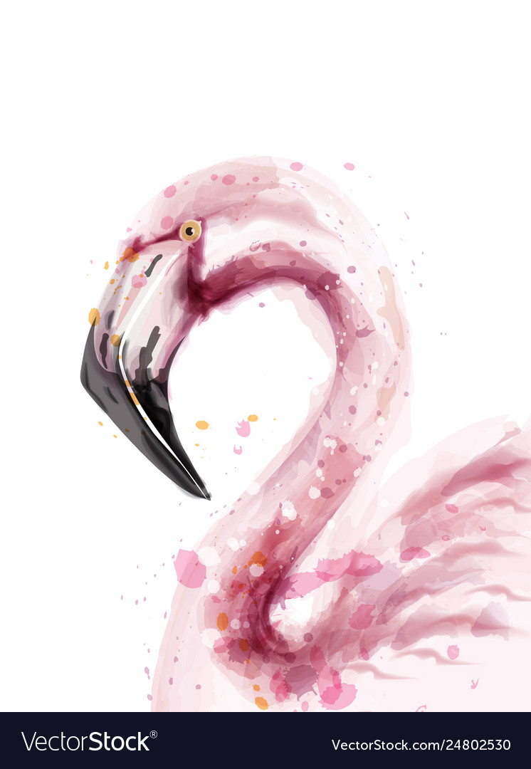 Flamingo watercolor isolated exotic